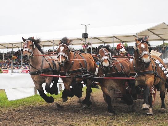 Carrera de caballos de tiro en Brück